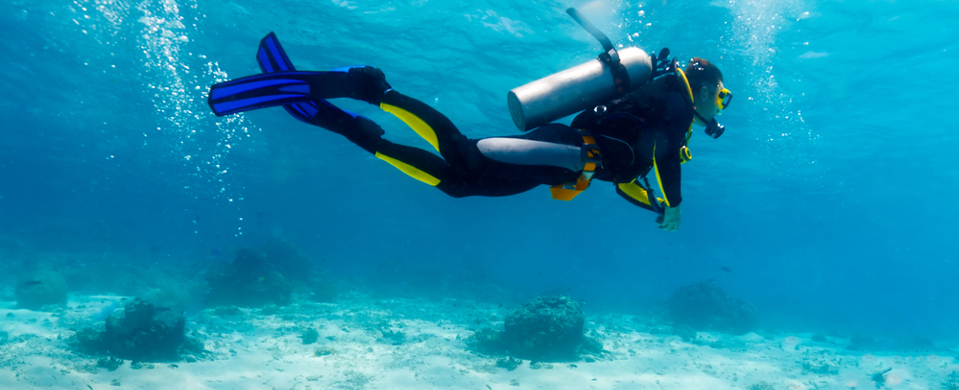 Shallow water diving in Melbourne
